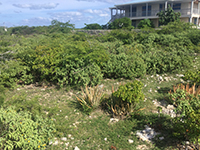 South Side Vacant Lot on Salt Cay